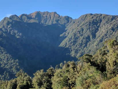Rainforest Greenery of Franz Josef:Phot Credit Hayley Burrell