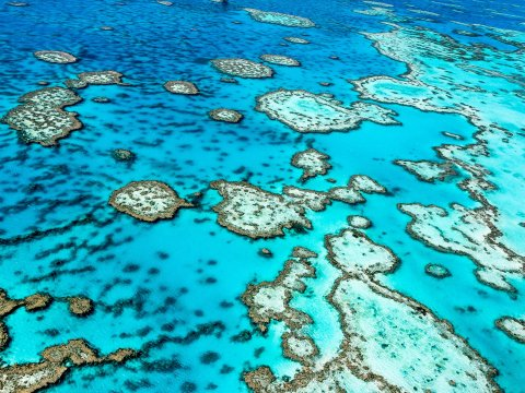 great-barrier-reef-endangered