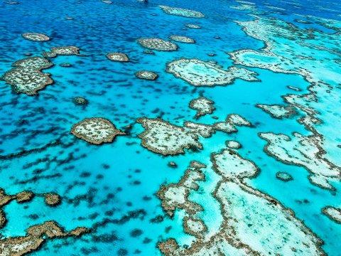 great-barrier-reef-endangered