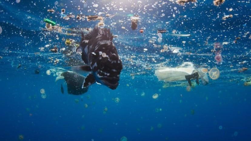 Plastic article